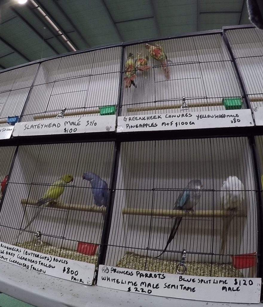 VIDEO: Ban Birds Sales & Breeding in Australia