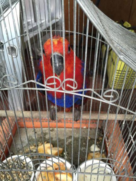 Report Bird Abuse